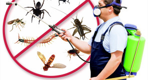 شركة مكافحة حشرات بالرياض 0540619155